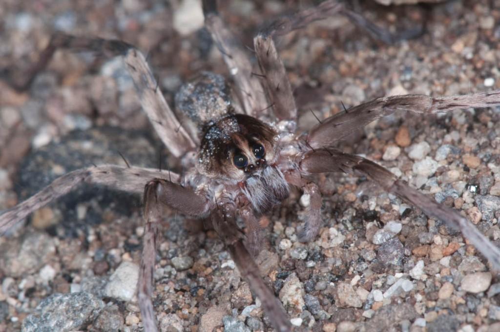 Spider on the beach.