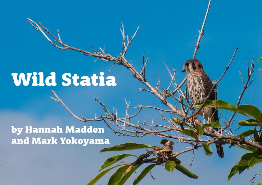 Wild-Statia