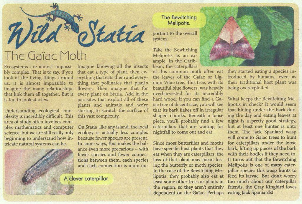 WildStatia-Gaiac-Moth-web